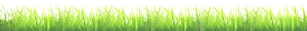Grass Bottom Border